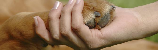webcabeceras_curso_veterinaria2